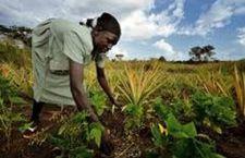 Empresas extranjeras arrebatan las tierras a los pobres en África